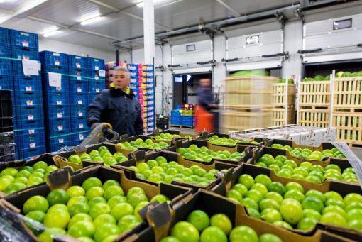 Großhandel Obst und Gemüse